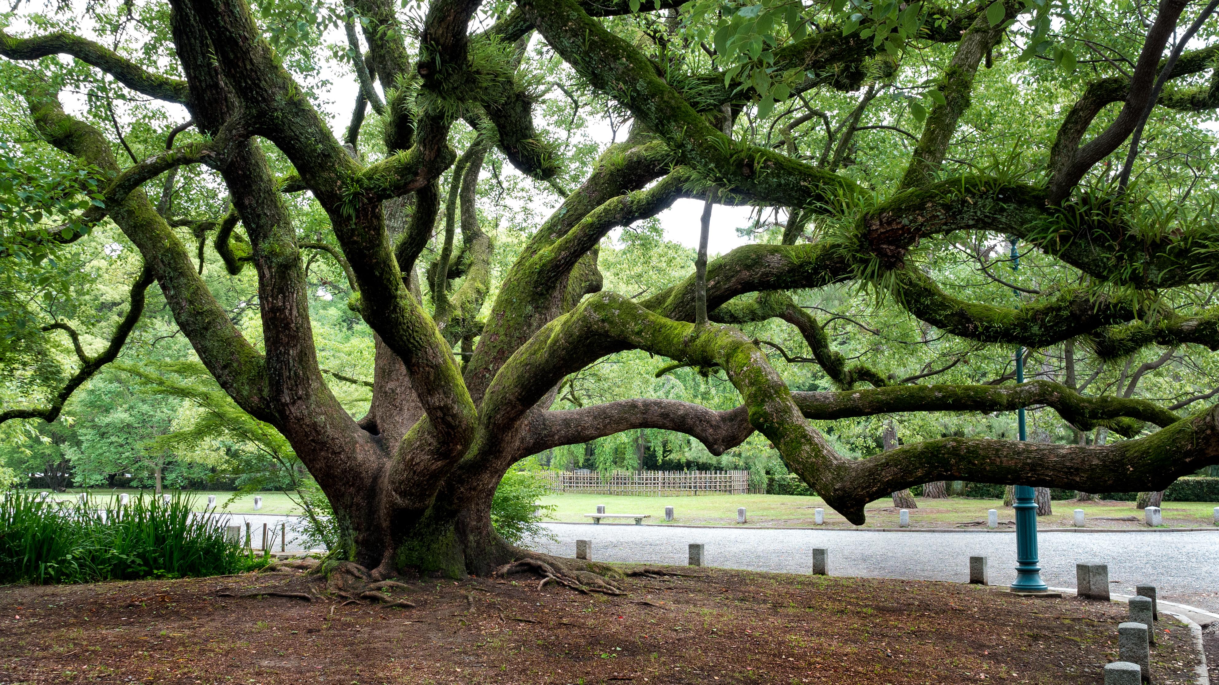 Green_Gnarled_Tree.jpg