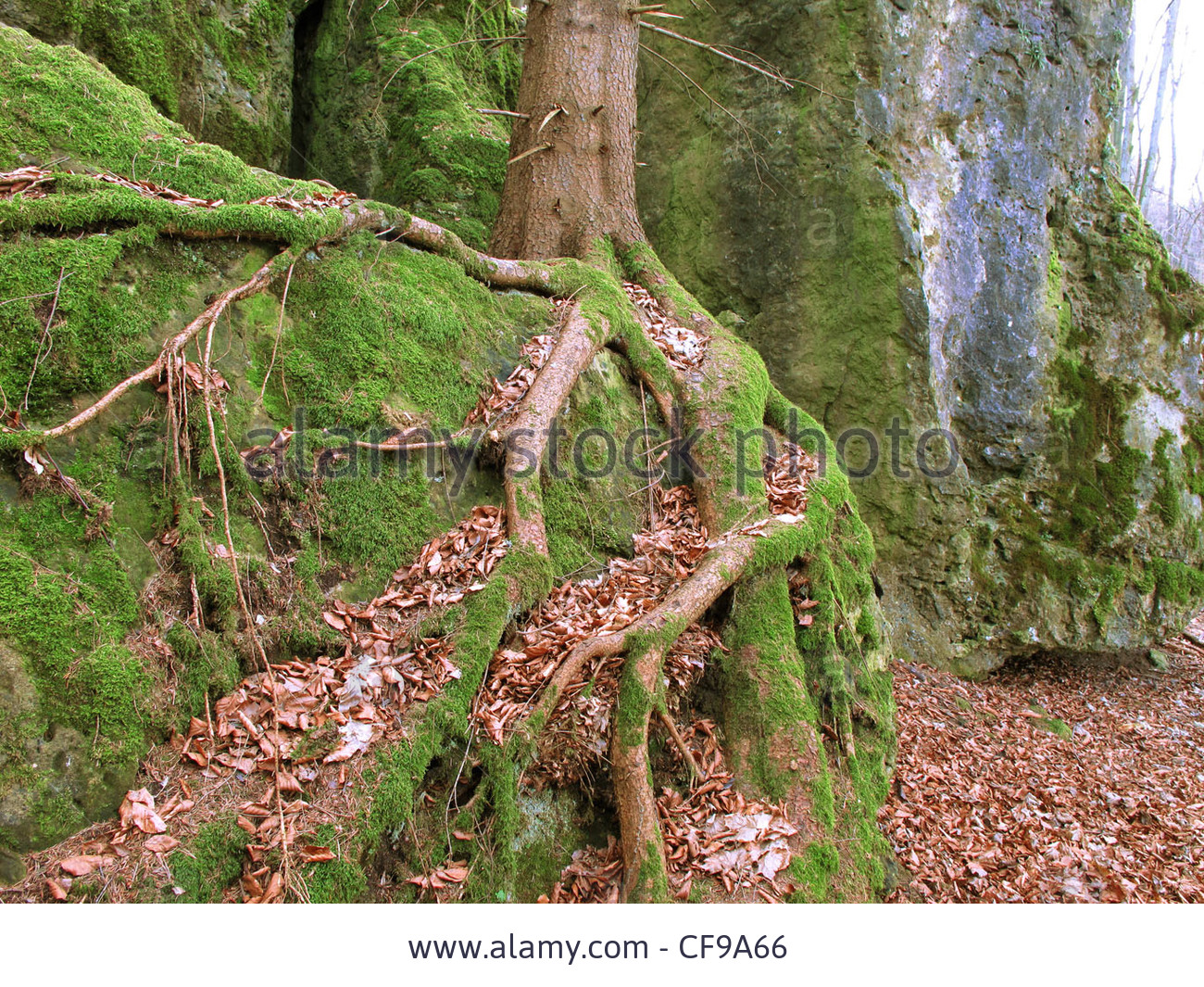 tree-root-cliff3.jpg
